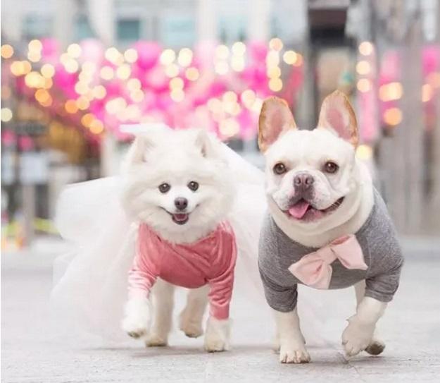 Sebastian and Luna Dreamy Outfits