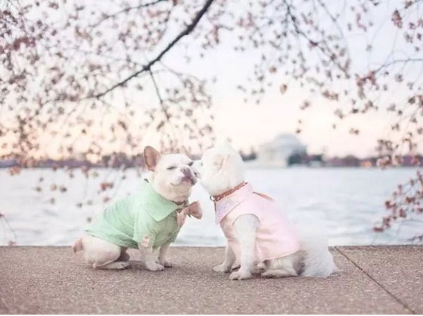 Sebastian and Luna under Cherry Blossoms