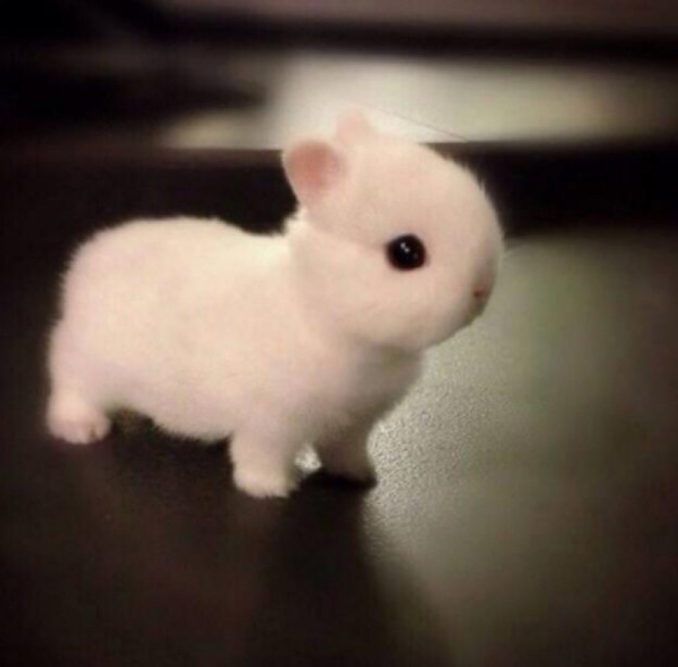 super cute bunny