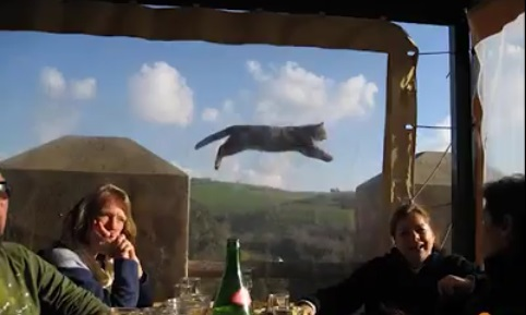 Cat jumps at the background