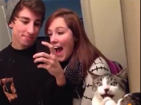 Cat photobombs couple selfie