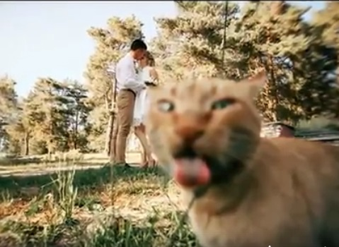 Cat photobombs prenup