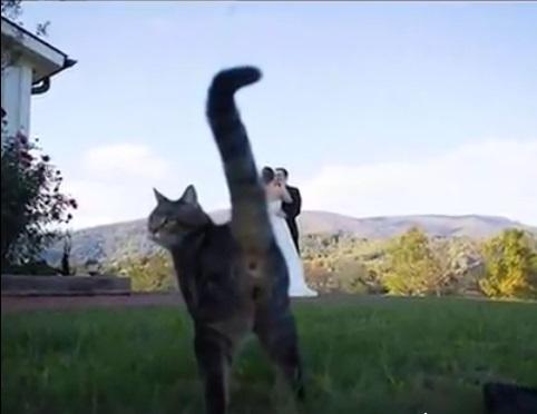 Cat photobombs wedding pic