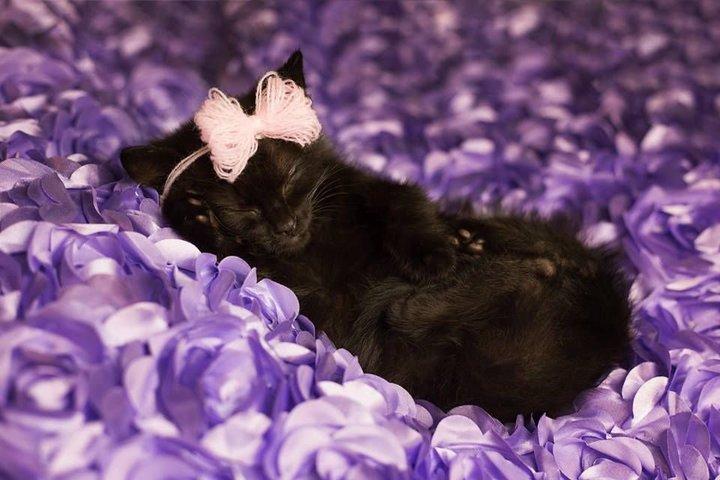 Cute Kitten Pictorial