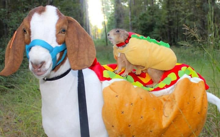 Dog on a horse