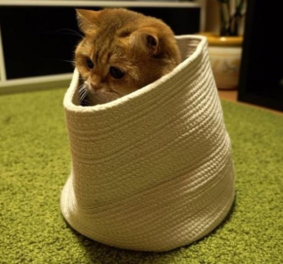 Hosico in a sack