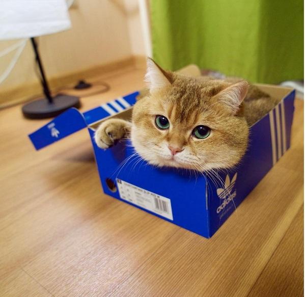 Hosico in a shoebox