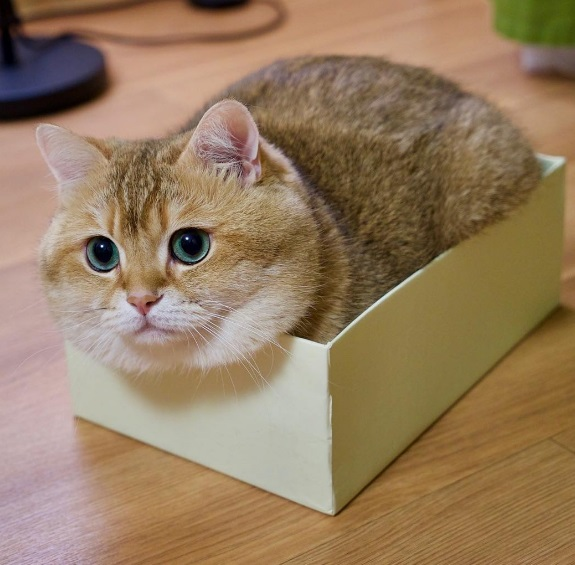 Hosico in small box