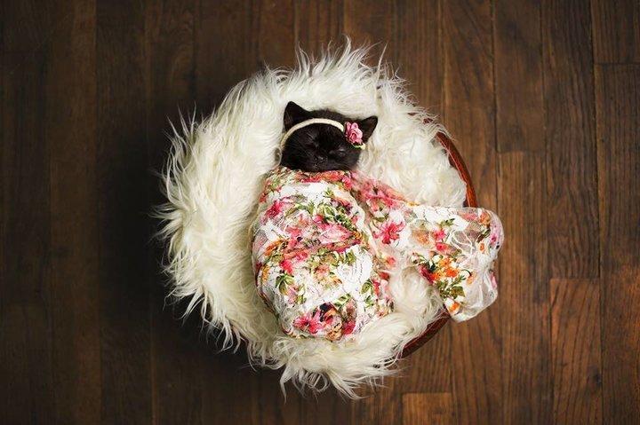 Luna Newborn pictorial