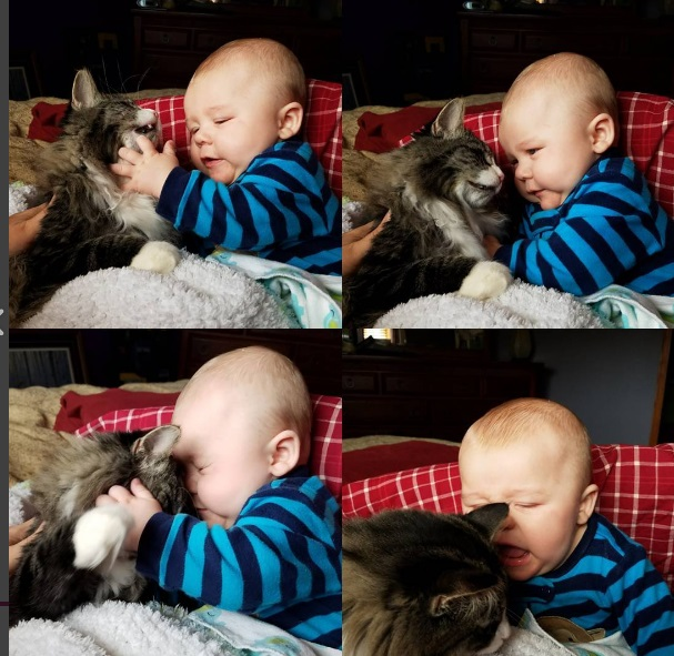 Playtime with baby and cat