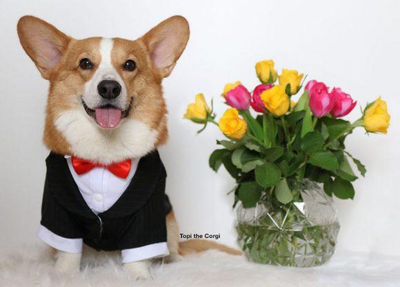Topi in formal Suit