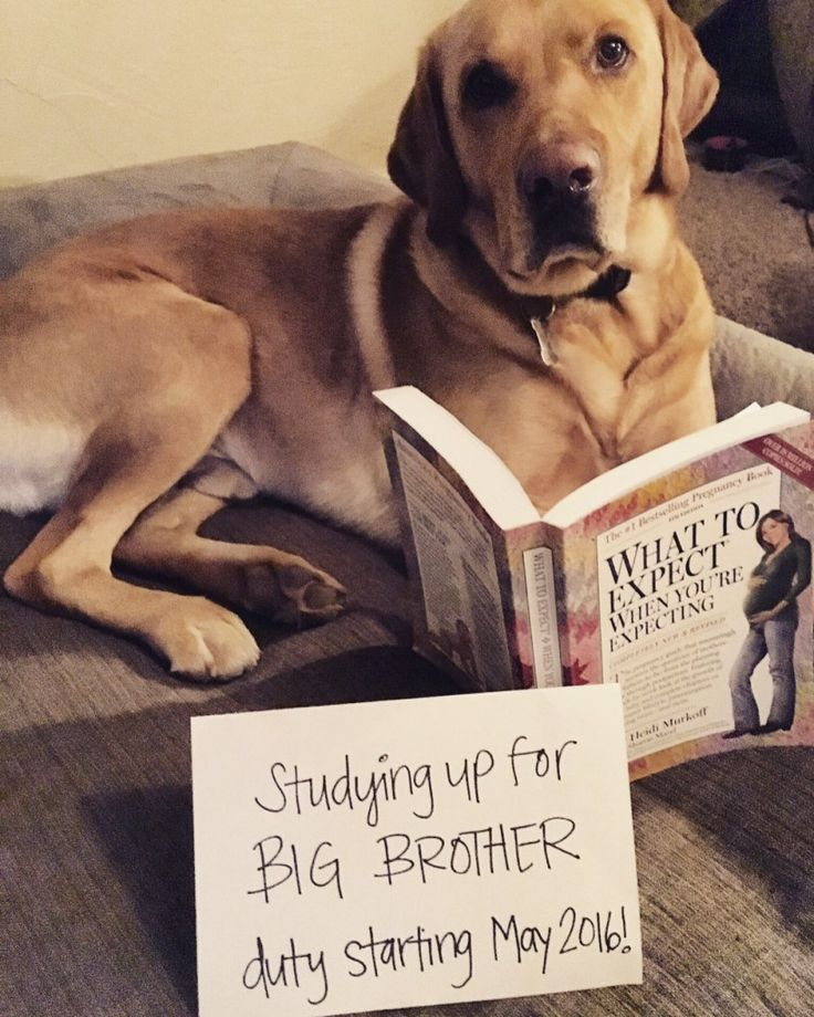 big brother duty
