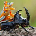 frog on a beetle