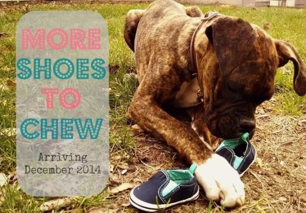 more shoes to chew