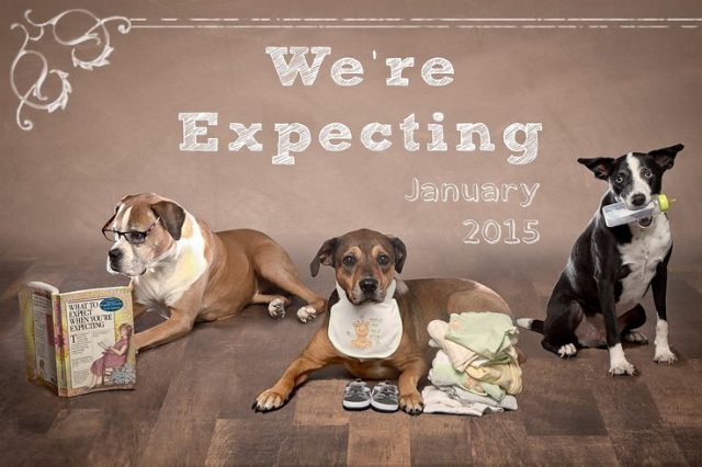 three dogs getting ready for baby arrival