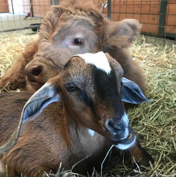 Buckley and his bestfriend