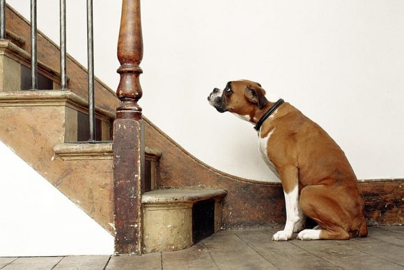 Dogs Figure Out Stairs