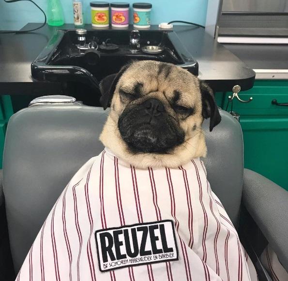 Doug salon time