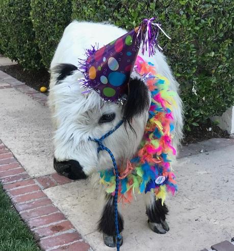 Moochi's first birthday