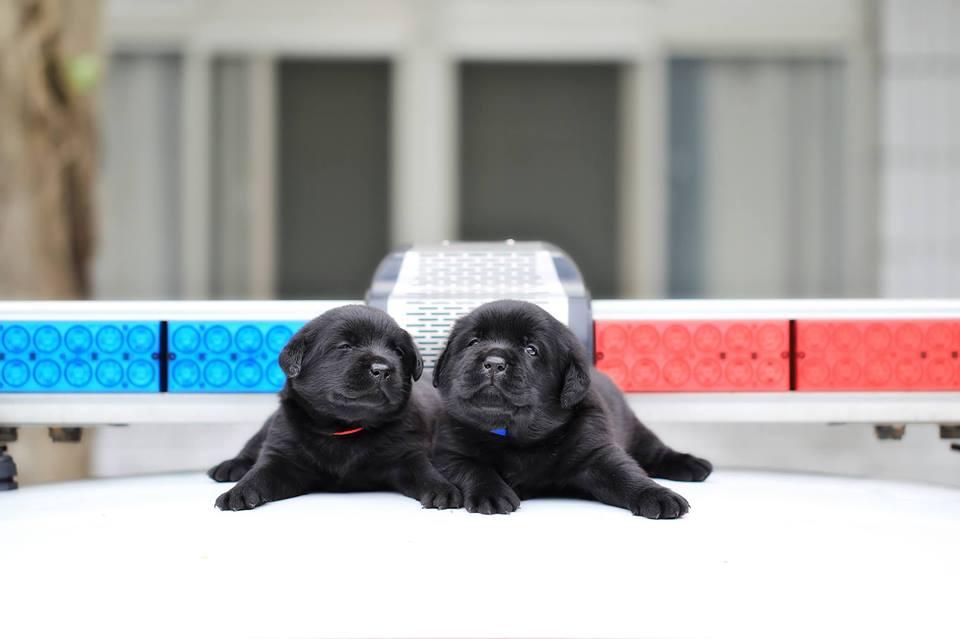 black puppydogs