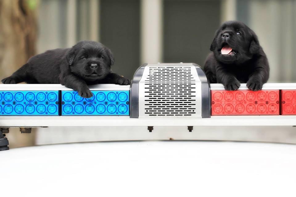 future policedogs