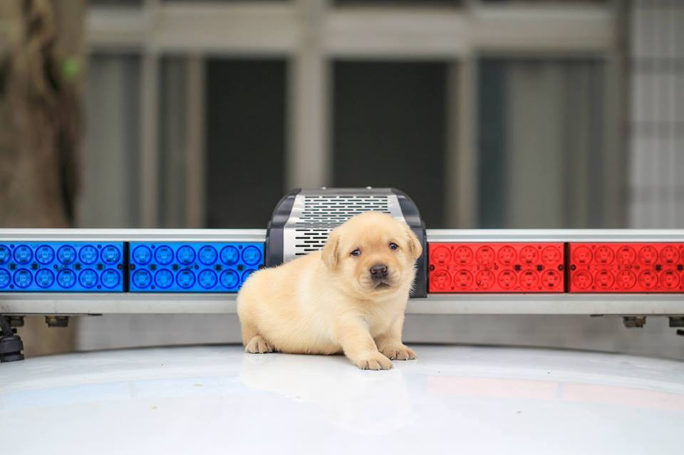 little puppy police