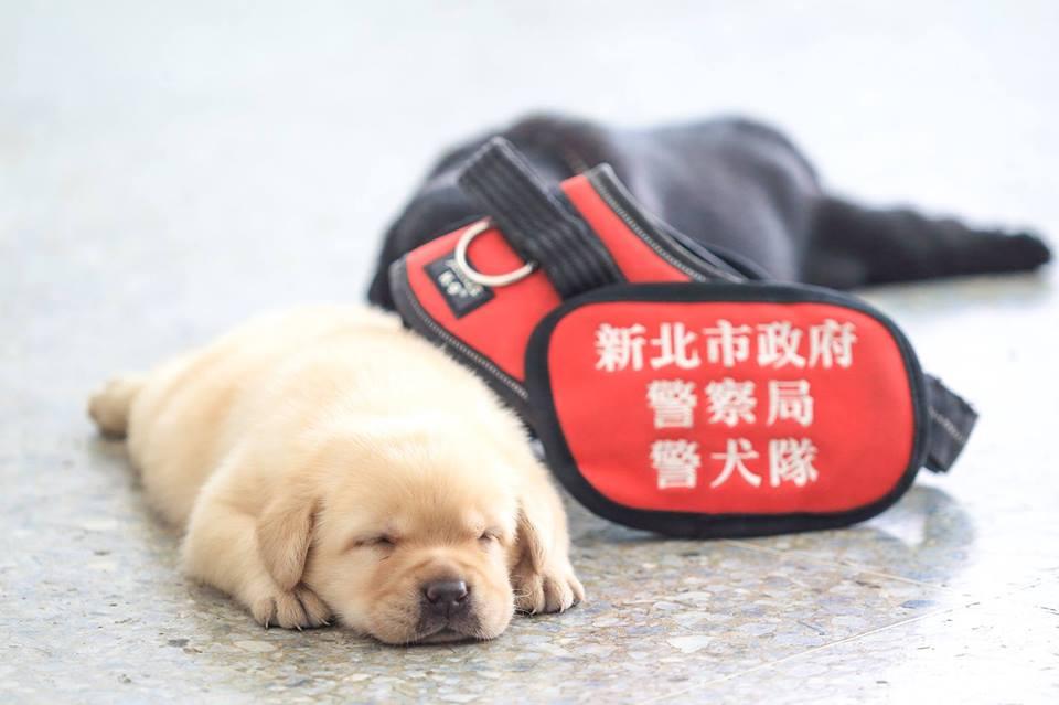puppy on duty