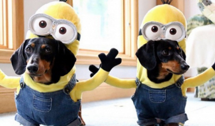 Crusoe and his brother as minions
