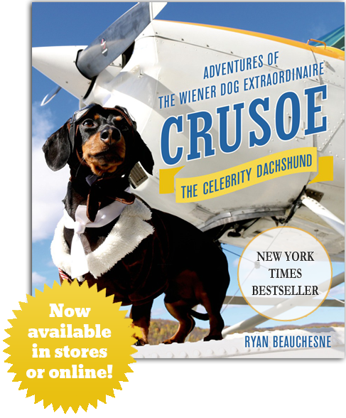 NYTimes Best Seller Crusoe