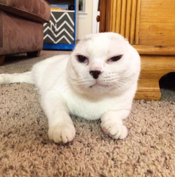Otitis looks like a grumpy cat