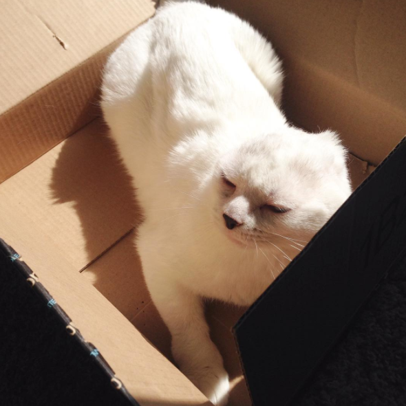 Otitis sleeping in a box