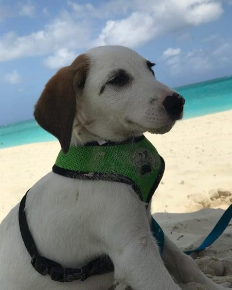 puppy in an island