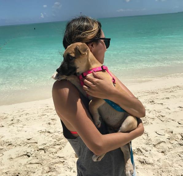 tourist take puppies to the beach