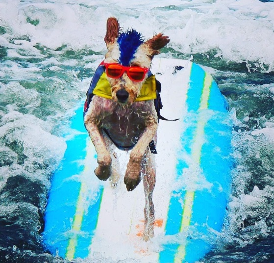 Cool Surfdog