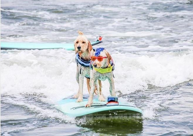Dog Tandem Surfing