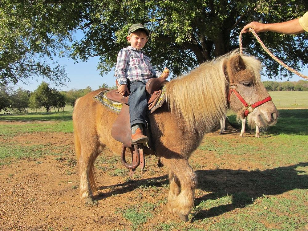 Jack The Shetland Pony