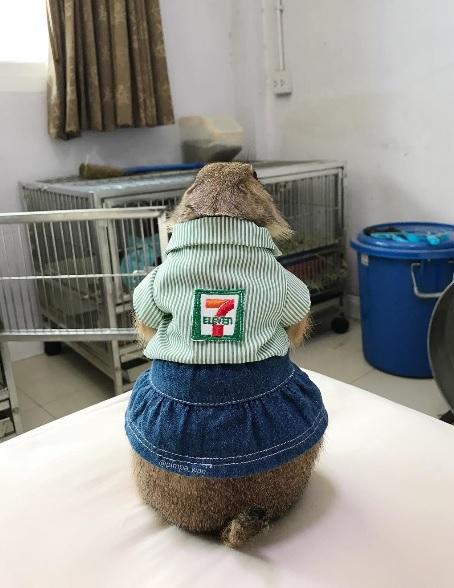 Prairie Dog in 7Eleven Uniform