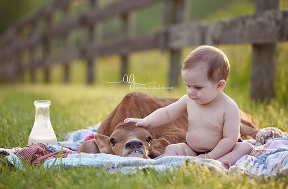 cow baby sitter