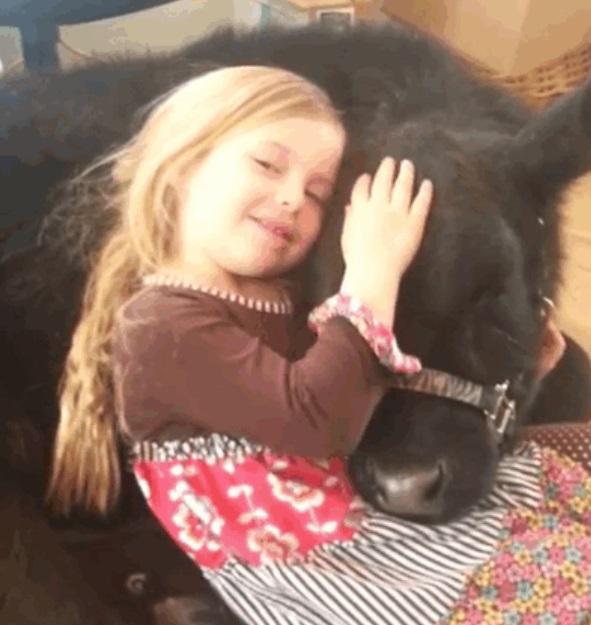 cow loves cuddles