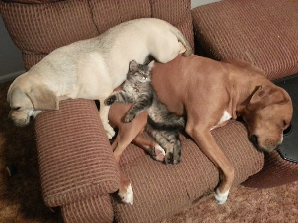 2 dogs and 1 cat