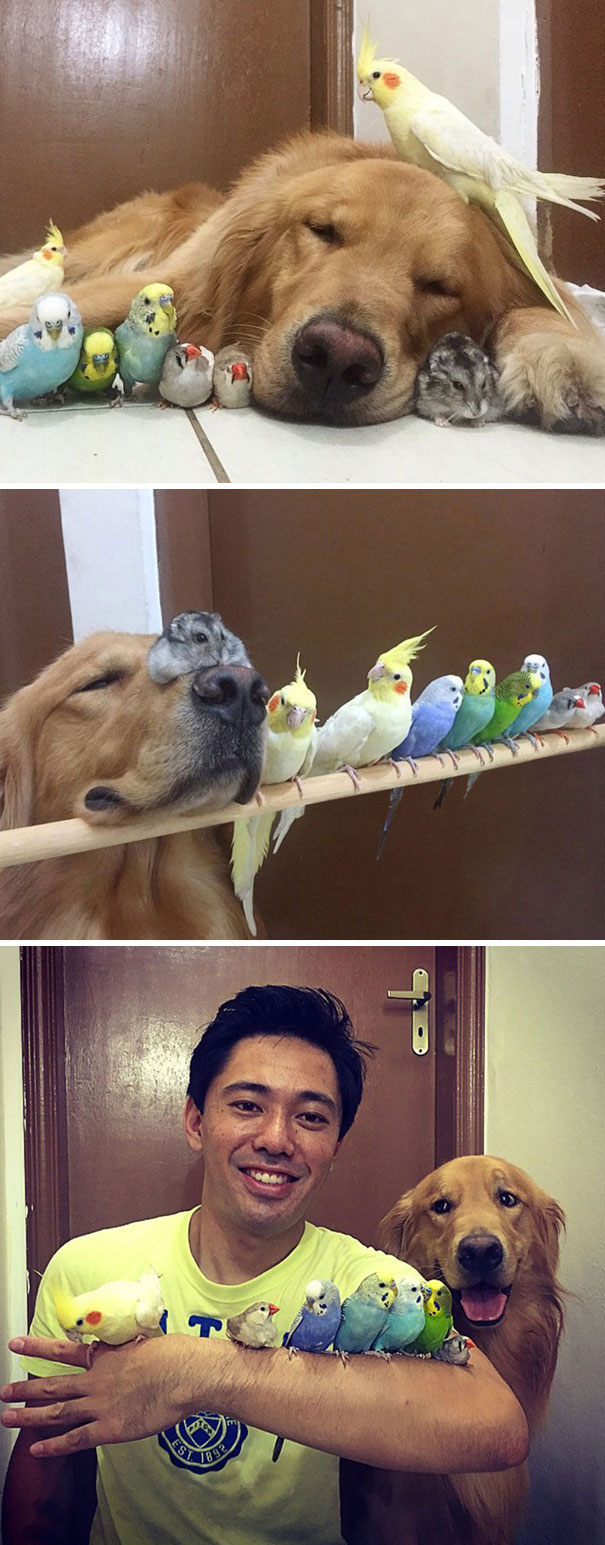 A dog, 8 birds, and hamster