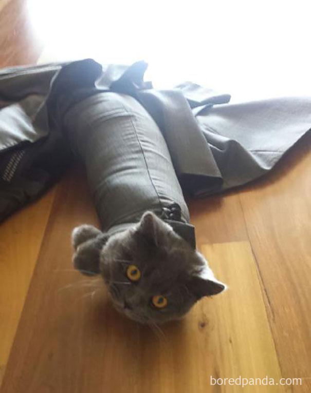 Cat on a suit
