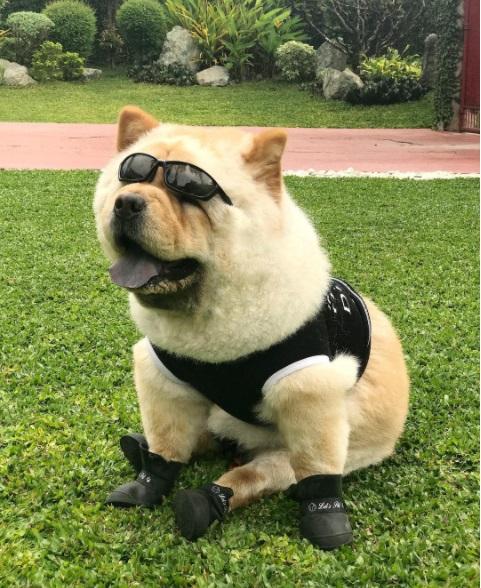 Chewy rocker dog