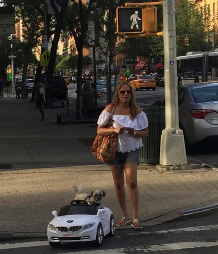 Dog BMW