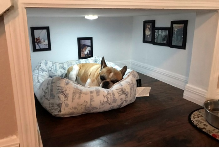 Dog separate room