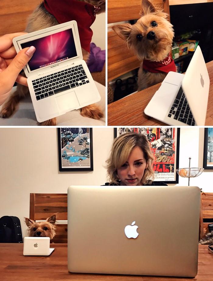 Dog with mini mac