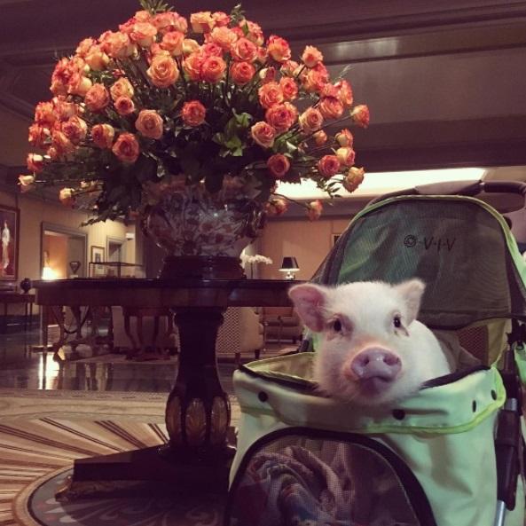 Hank in his stroller