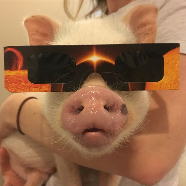 Hank viewing the solar eclipse
