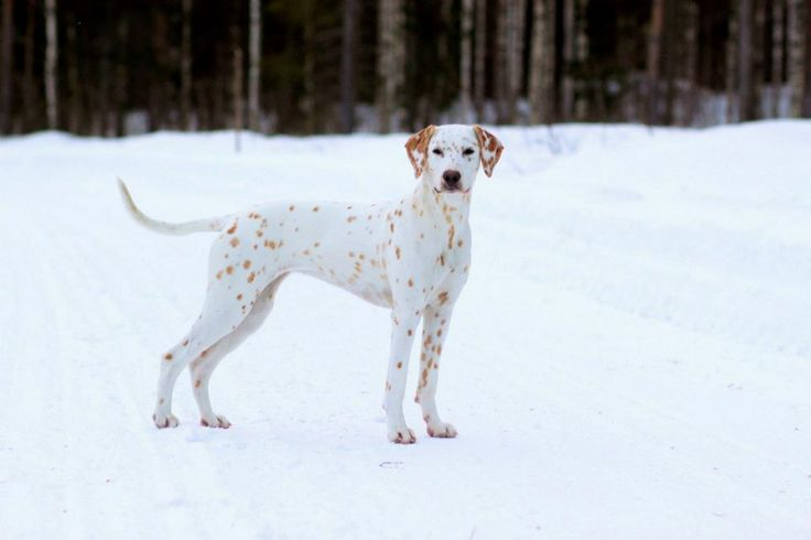 butter spots on white dog