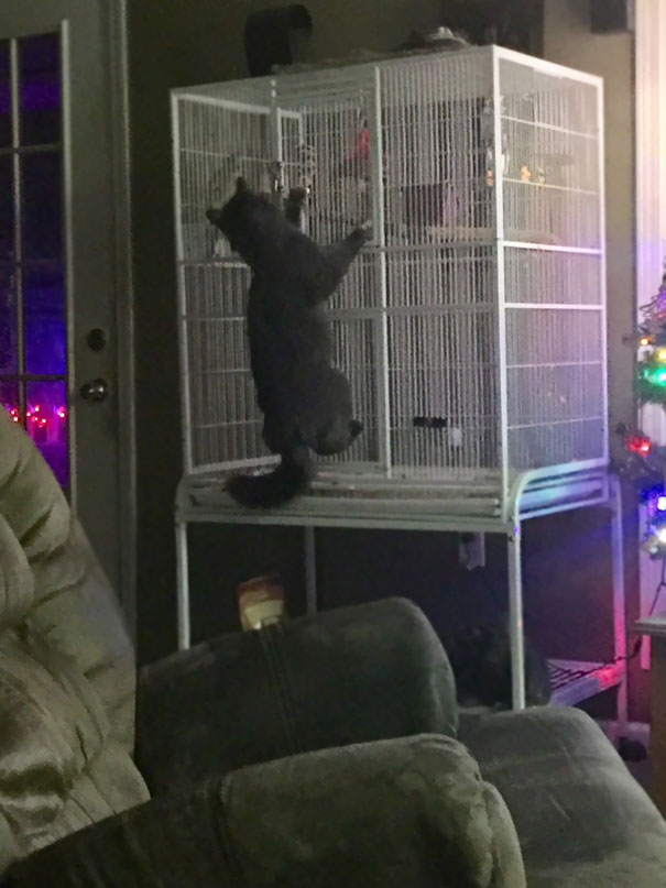 cat helping a parrot